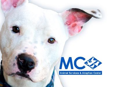 New Maryland Animal Cruelty Law